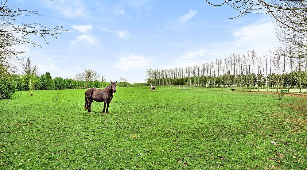 Lutton Marsh